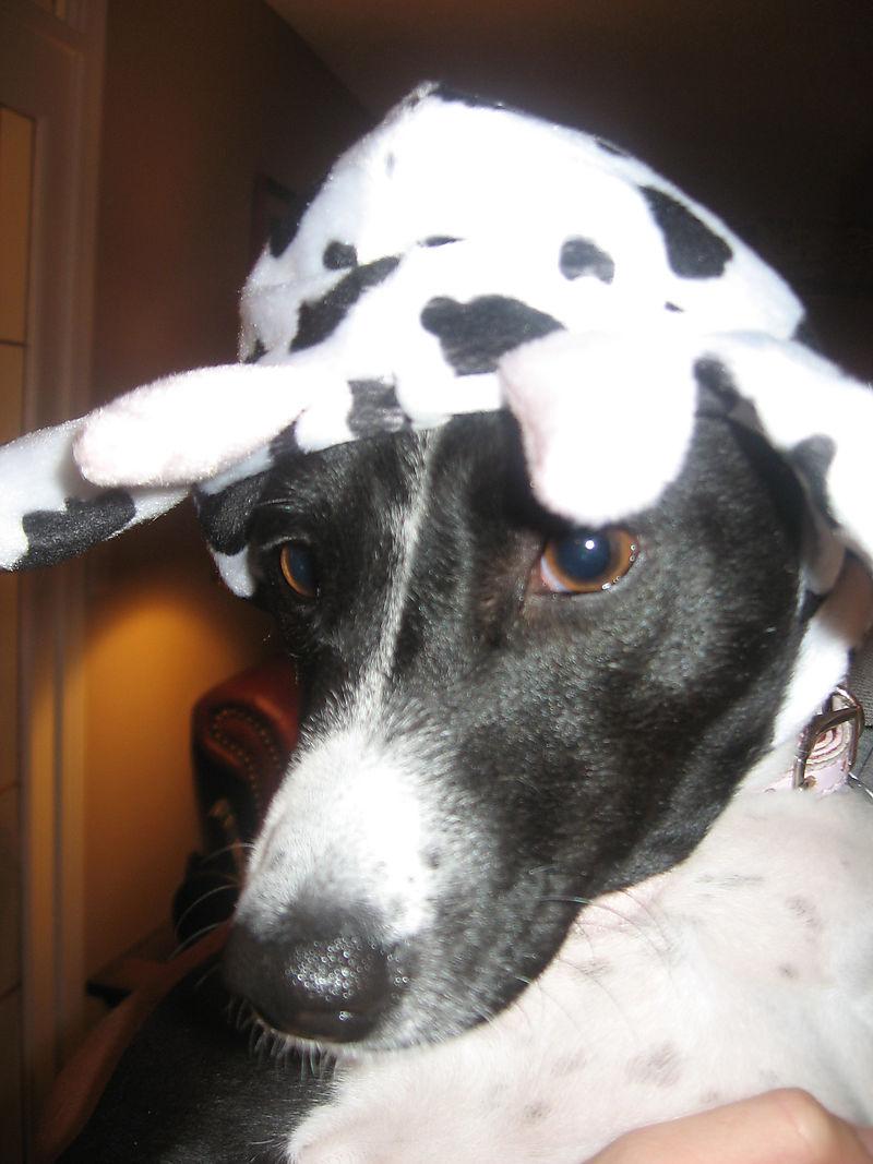 Logan Cow