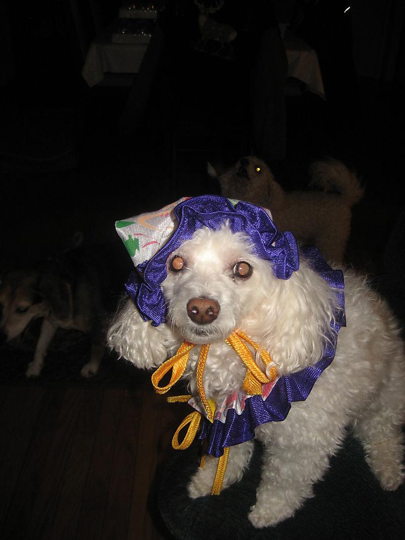 Gilby Halloween